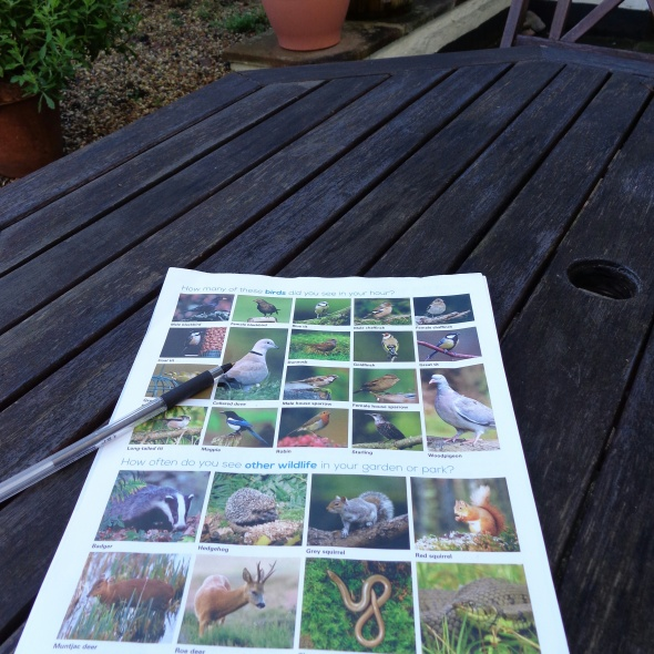 RSPB; birds; wildlife; big garden birdwatch; bird watch; birdwatch 2015