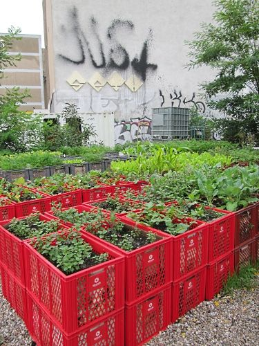 No garden? No problem! Ask for some old crates from your local supermarket and plant in them!