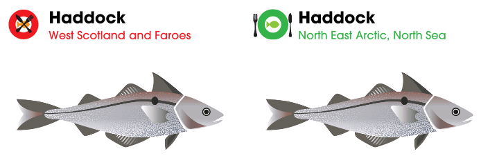 Haddock; West Scotland; Faroes; North East Arctic; North Sea