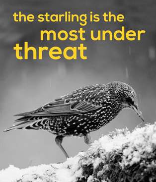 Starling is most under threat