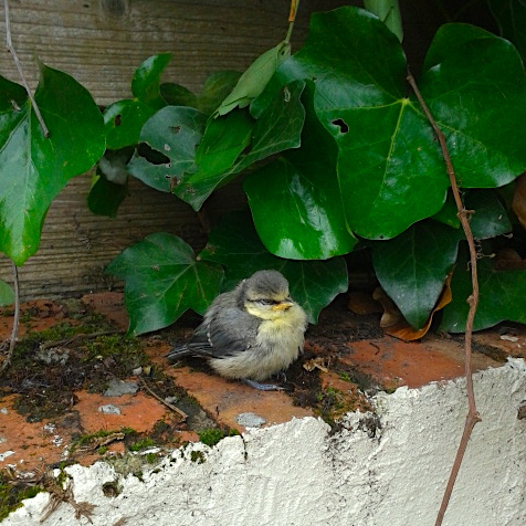 Bird on garden wall (square)